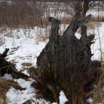 Texture Hunting – Prairie Moraine Dog Park